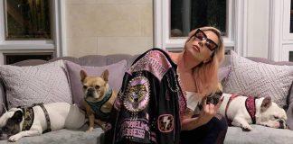 Леди Гага и ее собаки